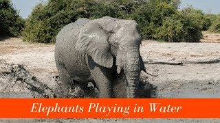 Cute Elephants Bathing & Playing in Water (In The Wild)