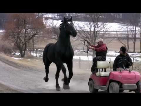 Moose March 23 2013
