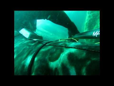 Pesca Submarina de Pargo.avi