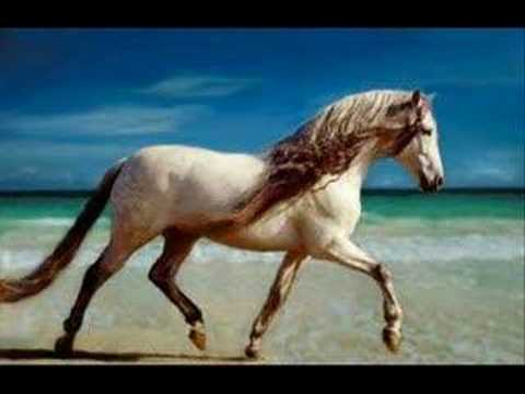 des photos de chevaux .