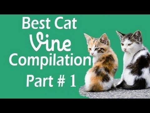 Best Cat Vines Part 2 - The Best Cat Vine Compilation