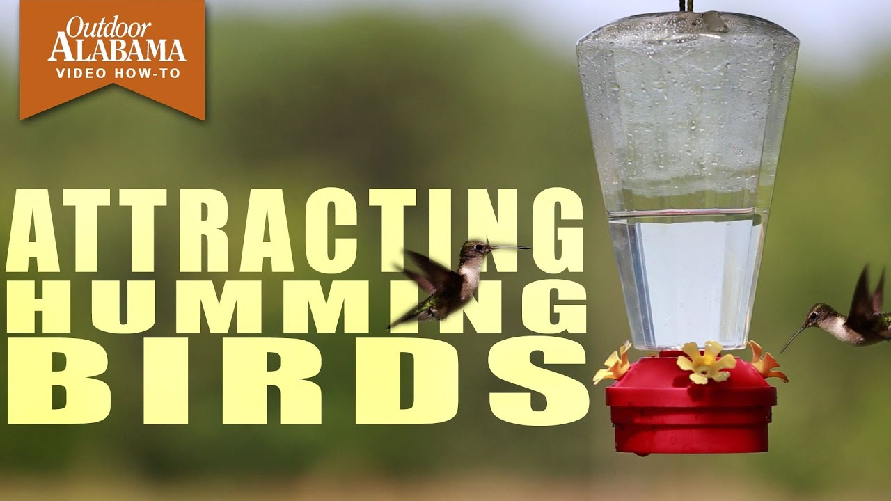 How To Attract Hummingbirds Youtube