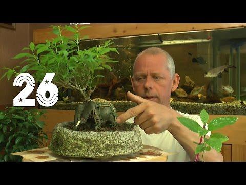 Die Sämlinge Und Wie Geht Es Weiter Mit Den Exoten Und Anderen Pflanzen Teil 26