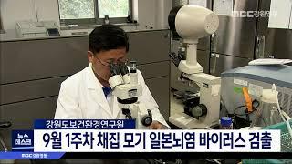 강원도 채집 모기 일본뇌염 바이러스 검출