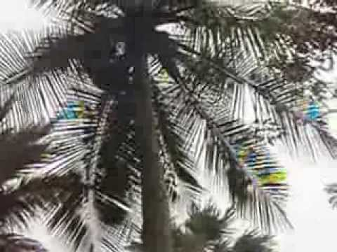 montée au cocotier trincomalee uppuveli sri lanka