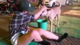 Sock với clip chú chó ăn xin cùng với chủ.....