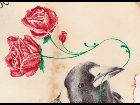 A Magpie Carrying Roses drawn by Paul Alexander Thornton.