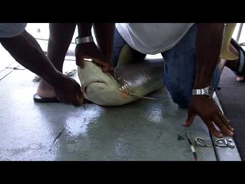 Freeport, Bahamas Booze Cruise, CAUGHT A SHARK, HD, MUST SEE!!!