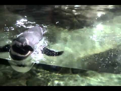 Monterrey Bay Aquarium CA