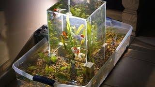 Building a suspended multi level aquarium INCREDIBLE