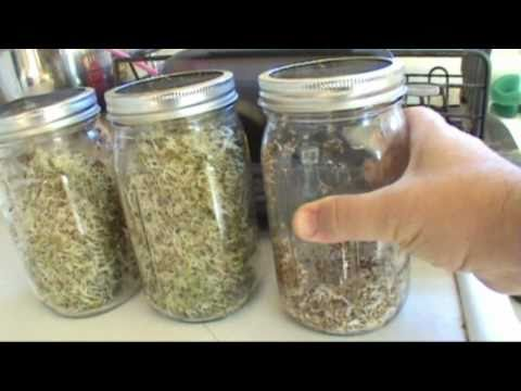 DIY Growing Alfalfa Sprouts In Your Kitchen