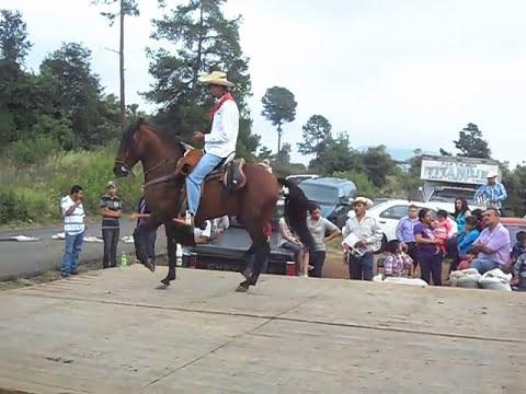 caballos bailadores michoacanos