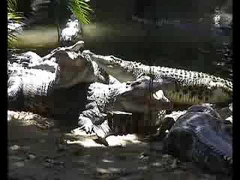 Jurong Crocodile Paradise