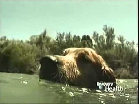 Rescue 911: Hero Dog Bella vs. Drowning Boy
