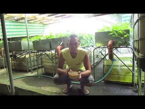 Organic Farming In The Philippines (reality Tv, Episode 11: man's Best