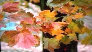 柔 Yawara 야와라 日本演歌 美空ひばりhibari Misora 전광용t S Tenor Saxophone색소폰연주동영상