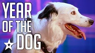 Celebrating THE BEST DOG AUDITIONS & TRICKS EVER  On Got Talent From Around The World