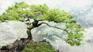 Relaxing Japanese Music - Bonsai Trees