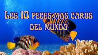 Los 10 peces mas caros del mundo