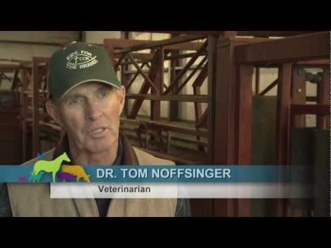 Dr. Noffsinger: Cattle health and food safety