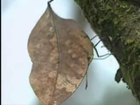 【陽明山國家公園管理處】六足王國-二子坪昆蟲生態
