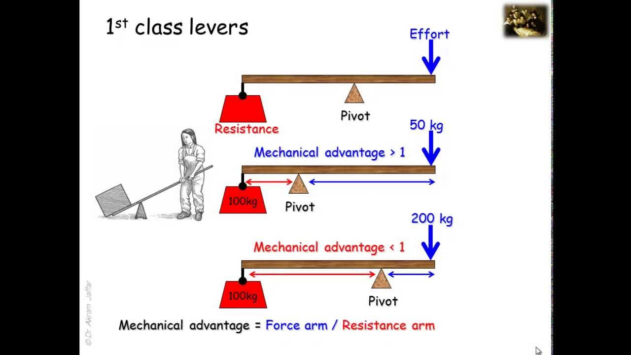 Lever systems in the human body - YouTube