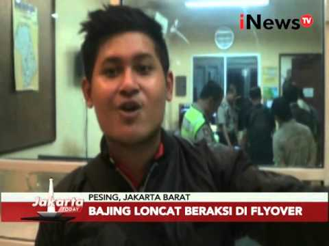 Waspada bajing loncat - Jakarta Today 11/02