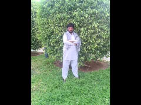 Suleman Saqi Kolo Tara video