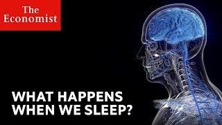 What happens when we sleep?   The Economist