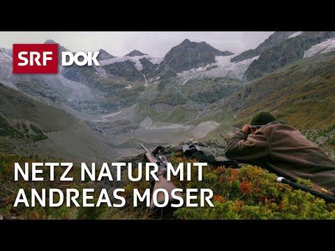 Die Schweiz und die Jagd | NETZ NATUR mit Andreas Moser | Doku | SRF DOK