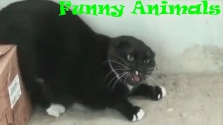 Angry cats compilation