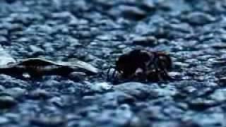 Vídeo 26 de Forfun