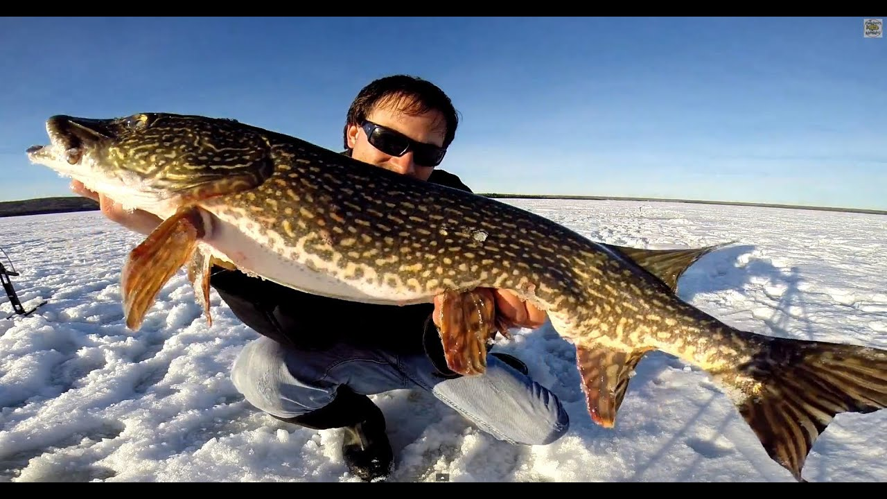 Wolf lake northern pike ice fishing with windlass tip ups for Tip up fishing