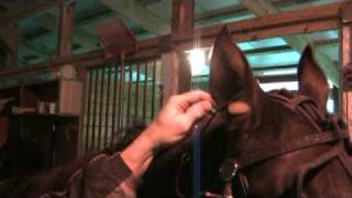 Tips of the Trade: Ear Plugs -- USTA Harness Racing