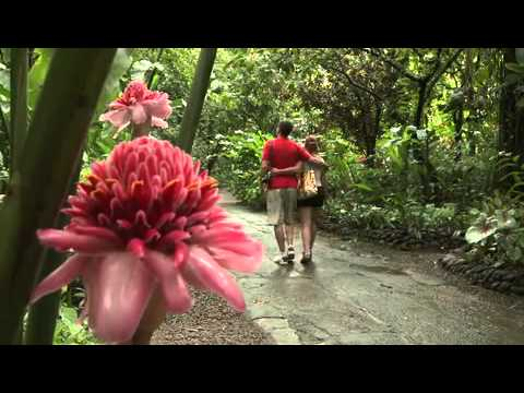 Affordable St. Lucia -- Diamond Botanical Gardens | Caribbean Travel + Life