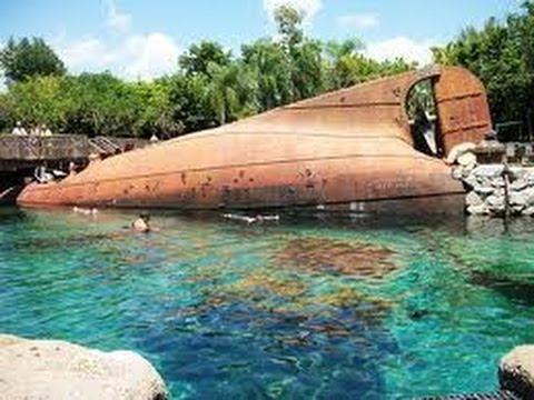 shark reef at typhoon lagoon walt disney world