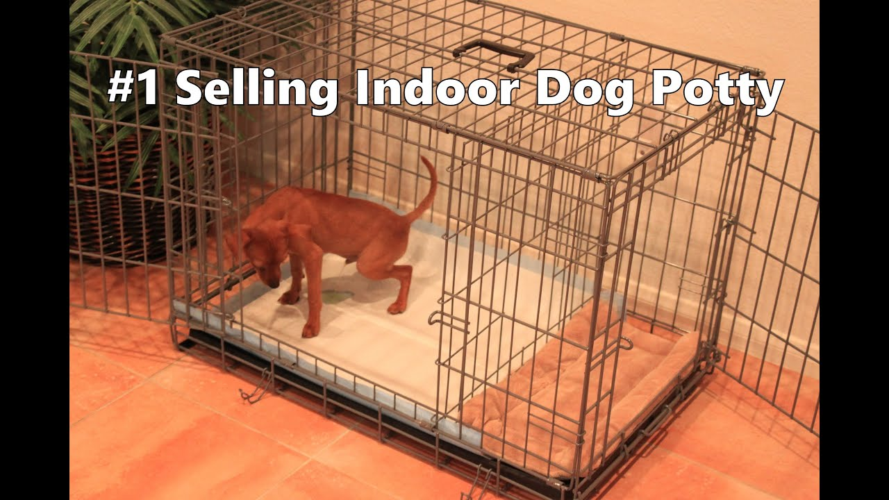 Crate Training A Dog With Cats