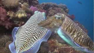 Scuba Diving in The Similan Islands, Koh Tachai and Richelieu Rock