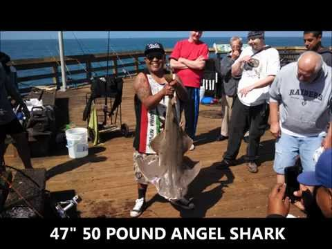 ventura pier fishing - angel shark