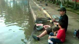 Mancing Ikan Patin besar