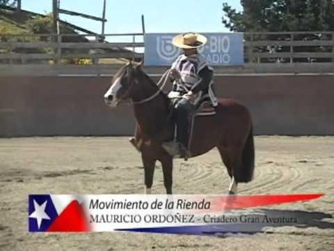 Movimiento de Rienda de Mauricio Ordoñez.