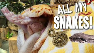 FEEDING TONS OF SNAKES AT MY REPTILE ZOO!!   BRIAN BARCZYK