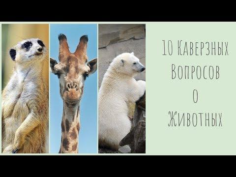 10 каверзных вопросов о животных