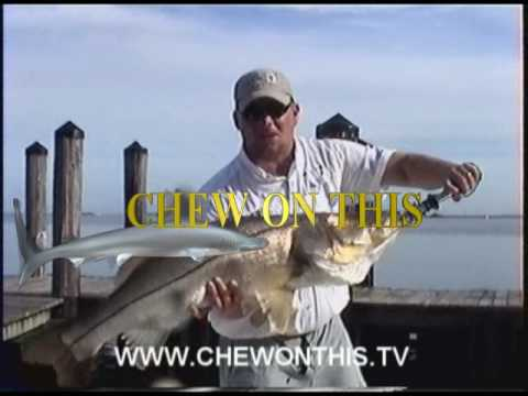 Monster Snook eats Ladyfish! Ft. Myers Florida Fishing Charters Trips Tours