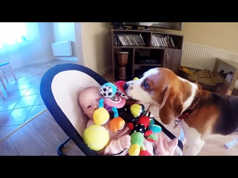 Guilty Dog Apologizes Baby For Stealing Her Toy:it Is Never Too Late For Apologize For Friends. video