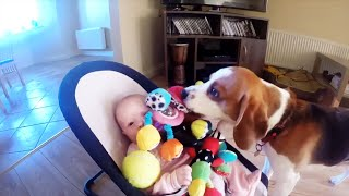 Guilty dog apologizes baby for stealing her toy