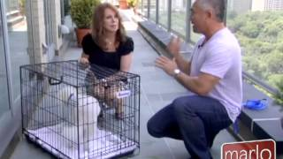 How To Crate Your Dog For Travel, from Cesar Millan
