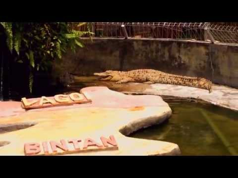Big Crocodiles in Private Zoo of Bintan in Indonesia