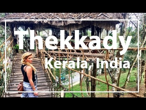 Kerala, India Thekkady: Monkeys, Elephants, Shopping & Treehouse!