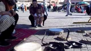 Unstoppable Snake Charming in Marrakech, Morocco....